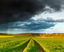 Rainy Dramatic Clouds and Rainbow over Fresh Green Spring Field